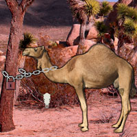 Free online flash games - Arabian Desert Escape game - WowEscape
