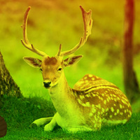 Free online flash games - Deer Forest Escape game - WowEscape