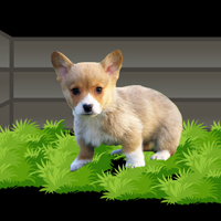Free online flash games - Dog Escape From Forest game - WowEscape