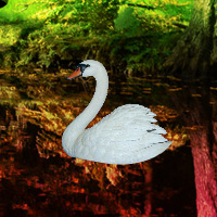 Free online flash games - Escape from Swan Forest game - WowEscape