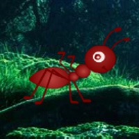 Free online flash games - Jumbo Ant Forest Escape