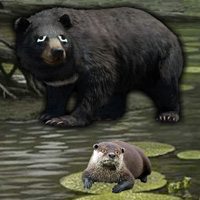 Free online flash games - Otter Escape game - WowEscape