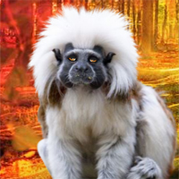 Free online flash games - Rescue The Tamarin game - WowEscape