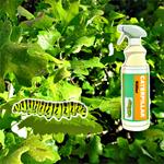 Free online flash games - Hidden Caterpillar game - WowEscape
