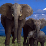 Free online flash games - Wild Elephants Find the Spot game - WowEscape
