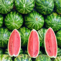 Free online flash games - Watermelon Hidden Numbers