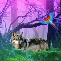 Free online flash games - Gray Wolf Forest Escape game - WowEscape