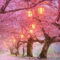 Free online flash games - Cherry Blossom Forest Escape game - WowEscape