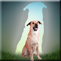 Free online flash games - Games2Jolly Chinook Dog Escape