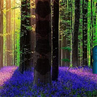 Lavender Forest Escape