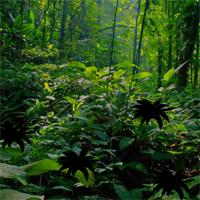 Free online flash games - Tropical Rain Forest Escape game - WowEscape