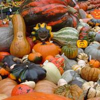 Free online flash games - Halloween Pumpkin Show game - WowEscape