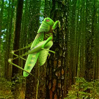 Free online flash games - Wow Grasshopper Forest Escape game - WowEscape