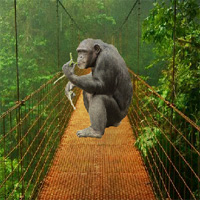 Free online flash games - Baby Chimp Rescue FreeRoomEscape game - WowEscape