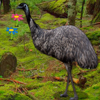 Free online flash games - Big Emu Forest Escape game - WowEscape