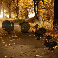 Free online flash games - Hiddenogames Hidden Thanksgiving Turkey game - WowEscape