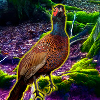 Free online flash games - Big Pheasant Forest Escape game - WowEscape