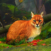 Free online flash games - Big African Golden Cat Escape game - WowEscape