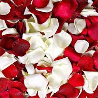 Free online flash games - HOG Valentine Hidden Rose game - WowEscape
