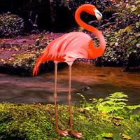 Free online flash games - Wowescape Flamingo Forest Escape game - WowEscape