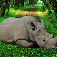 WowEscape Save the Rhinoceros