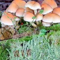 Free online flash games - Mysterious Mushroom Forest Escape EscapeFan game - WowEscape
