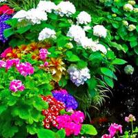 Free online flash games - Avm Flowers Garden Escape game - WowEscape