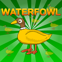 Free online flash games - Games2Jolly Waterfowl Rescue
