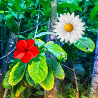 Free online flash games - Wowescape Tropical Flower Forest Escape game - WowEscape