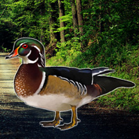 Free online flash games - Forest Wood Duck Rescue game - WowEscape
