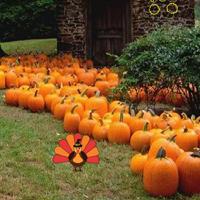 Free online flash games - Autumn Turkey Forest Escape