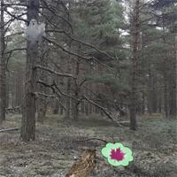 Free online flash games - EscapeFan - Ainars Frozen Forest Adventure game - WowEscape