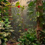 Free online flash games - Tropical Forest Escape game - WowEscape